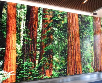 RedwoodsImage