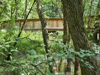 Trail through a natural wetland